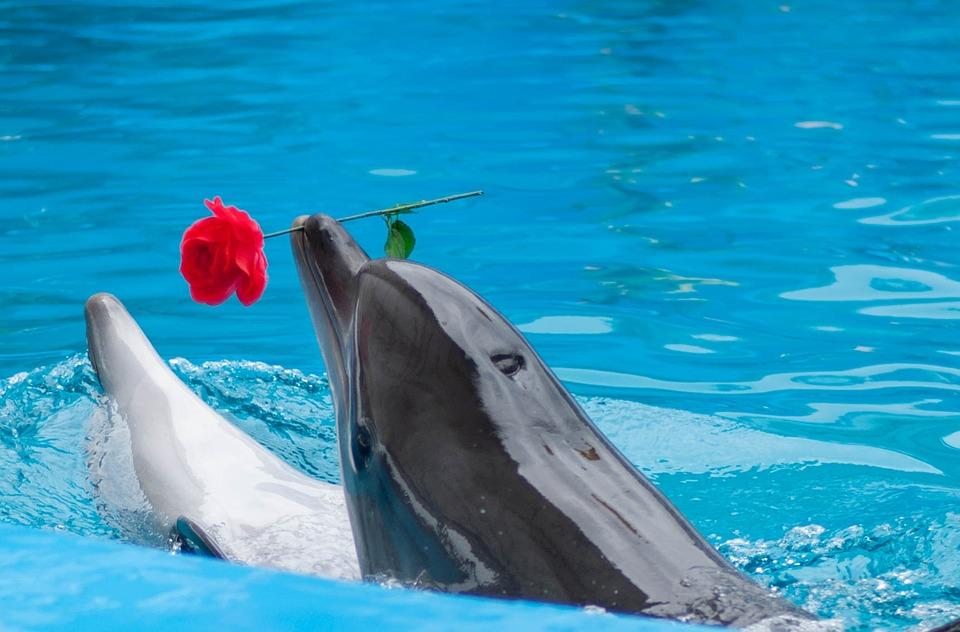 Dolphinarium, Sea, Dolphin