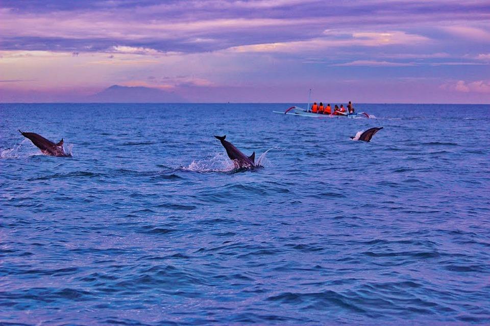 Bali, Dolphins, Sunrise, Lovina, Indonesia, Ocean
