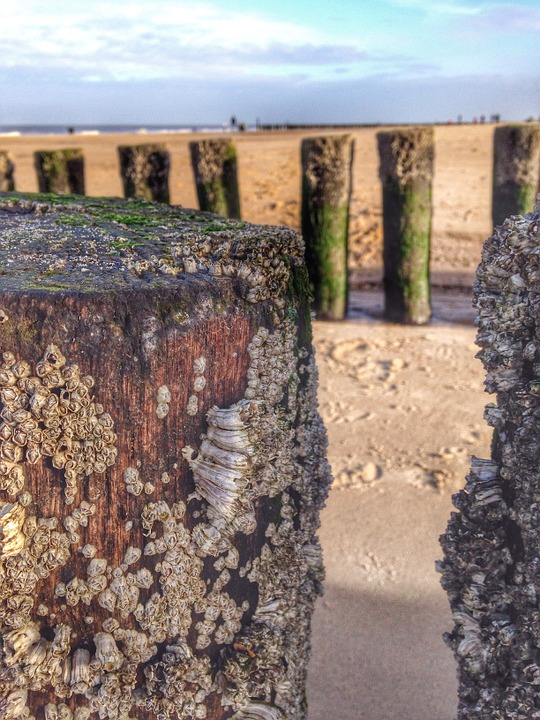 Post, Beach, Water, Sea, Wood, Sand, Domburg, Zeeland