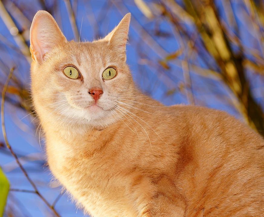 Cat, Female, Domestic Cat, Cat Face, Portrait, Sweet