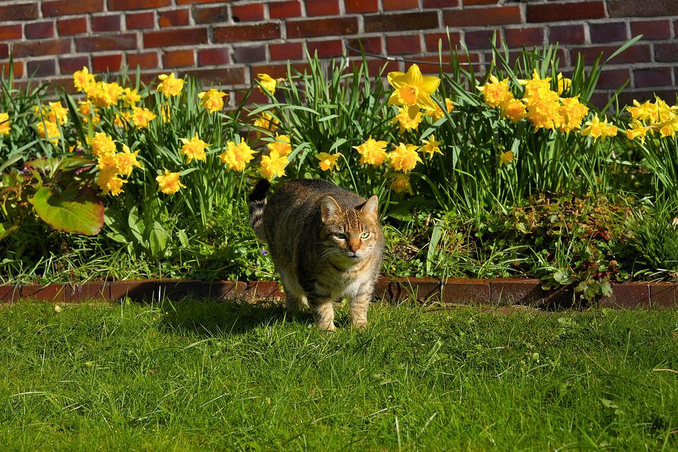 Cat, Female, Garden, Domestic Cat, Cat Face, Sweet