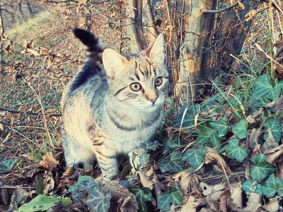Cat, Forest, Curious, Attention, Domestic Cat, Tree