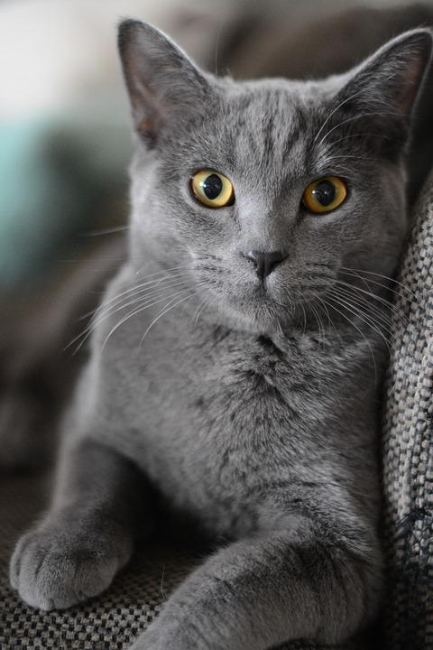 Cat, Portrait, Kitten, Domestic Cat, Animal, Pet, Cute