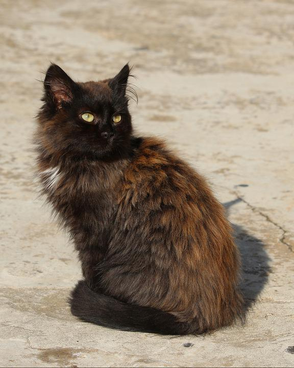 Cat, Domestic Cat, Kitten, Kitty, Fluffy, Pets