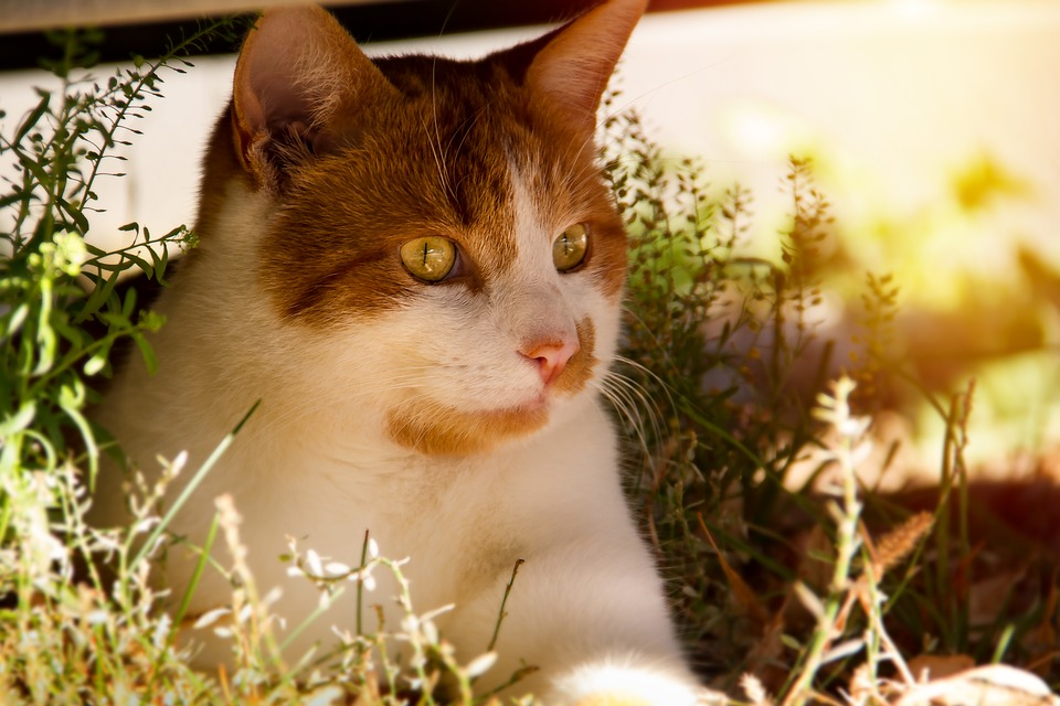 Cat, Orange, Young, Red, Sitting, Grass, Domestic Cat