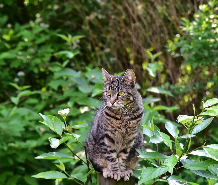Cat, Sit, Animal, Pet, Domestic Cat, Nature, View
