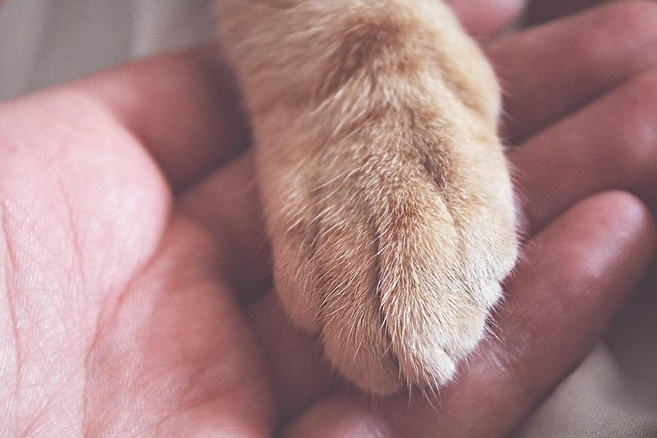 Paw, Hand, Interaction, Pet, Animal, Domestic