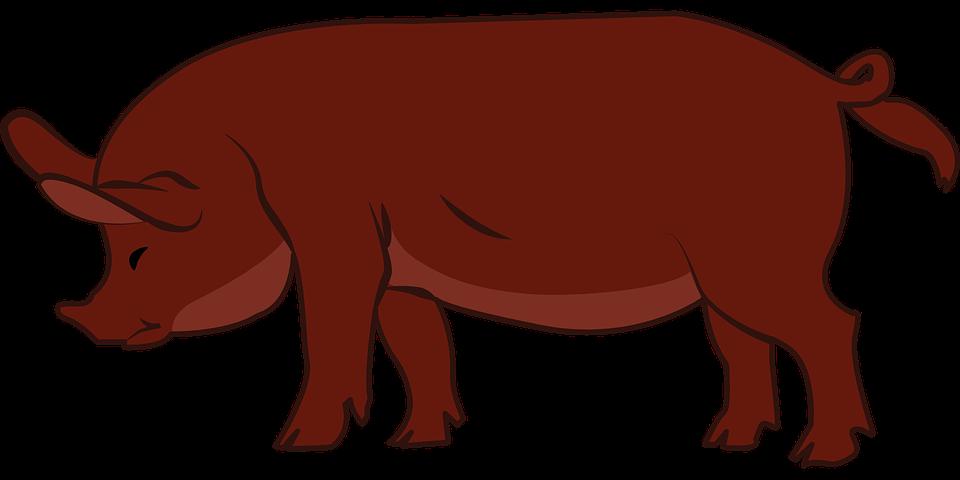 Pig, Livestock, Animal, Hoofed, Farm, Domestic, Pork