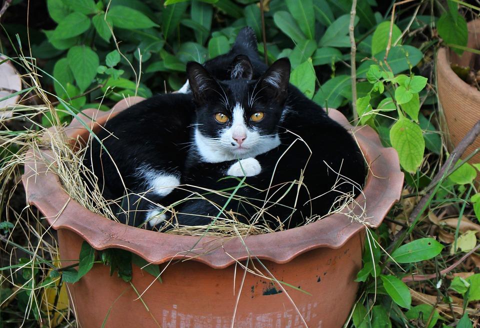 Cats, Feline, Animal, Pet, Cute, Domestic, Mammal, Fur