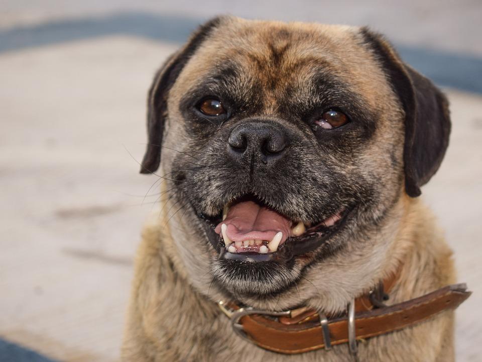 Dog, Animal, Looking, Outdoor, Portrait, Domestic