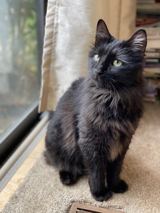 Cat, Feline, Animal, Pet, Portrait, Domestic