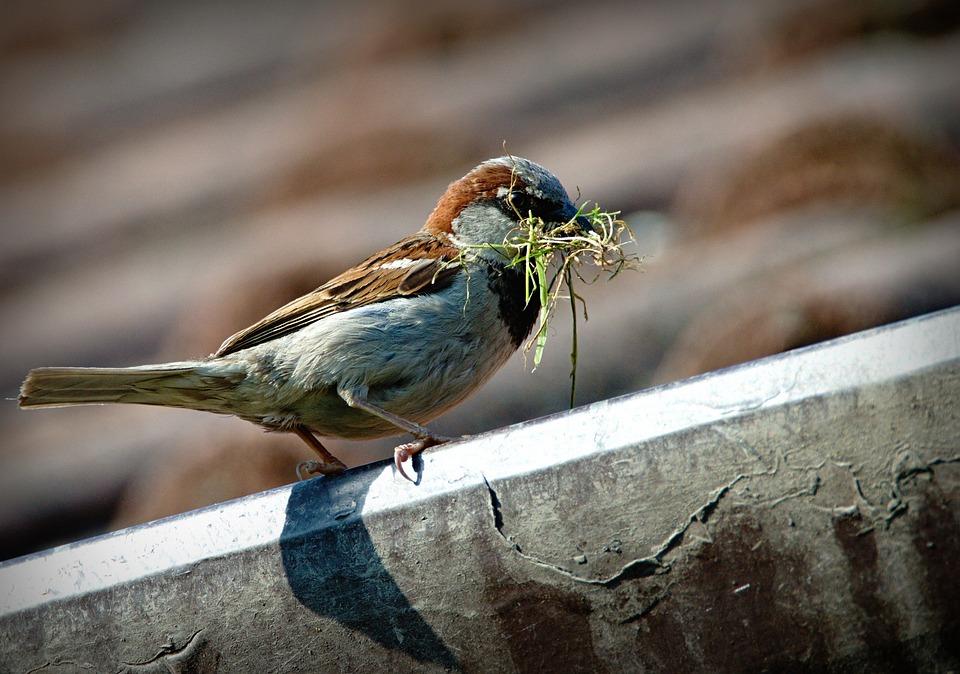 Sparrow, Bird, A Lone, Beak, Nature, Domový