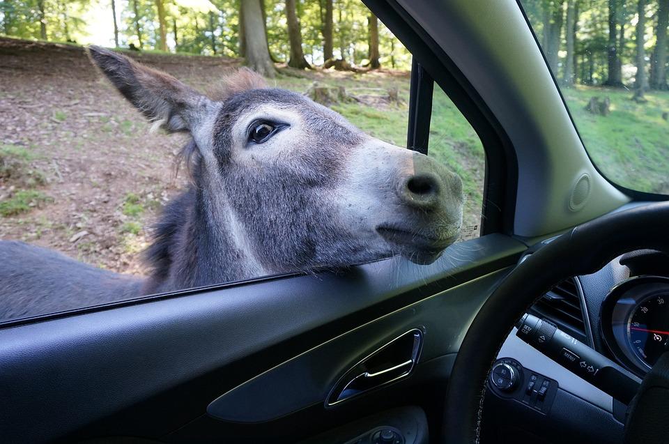Donkey, Auto, Zoo, Park, Animal World, Vehicle, Funny