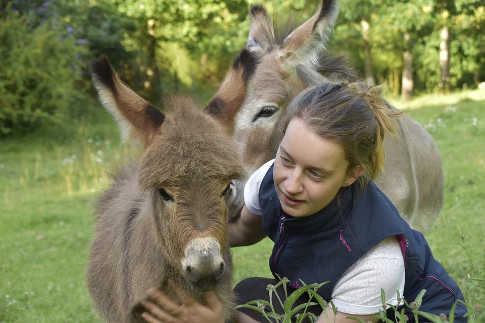 Donkey, Donkey Miniature, Small Ass