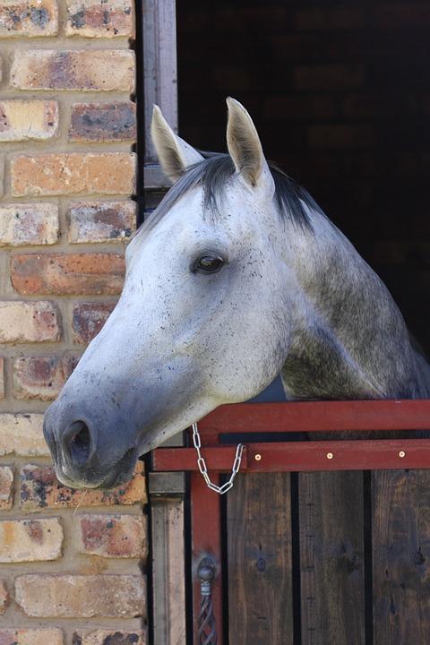 Horse, Grey, Stallion, Stable, Door, Horse Head, Animal