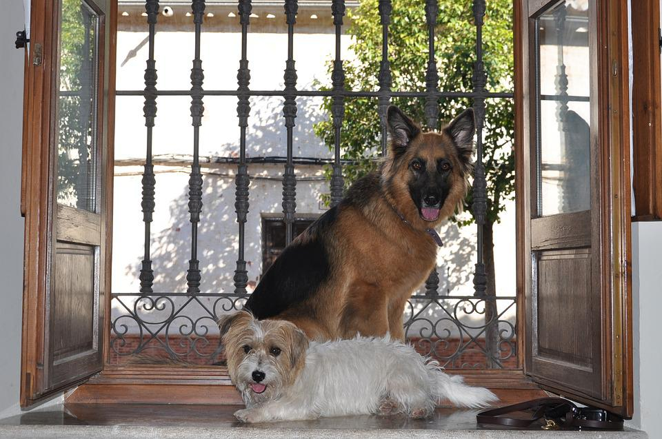 Window, Door, Wood, House, Dogs, Old, Bed And Breakfast