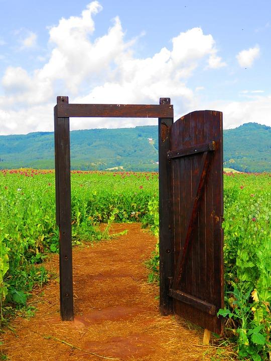 Door, Field, Flowers, Nature, Poppy, Summer, Away, Open