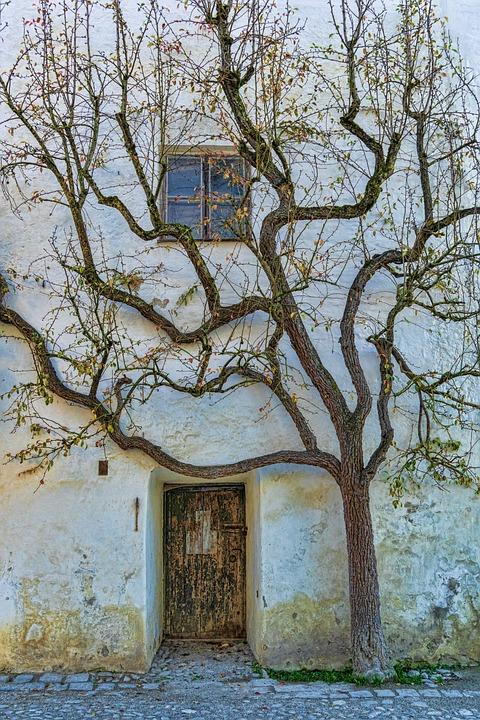 Door, Input, Tree, Wall, Old, Plant, Structure, Window