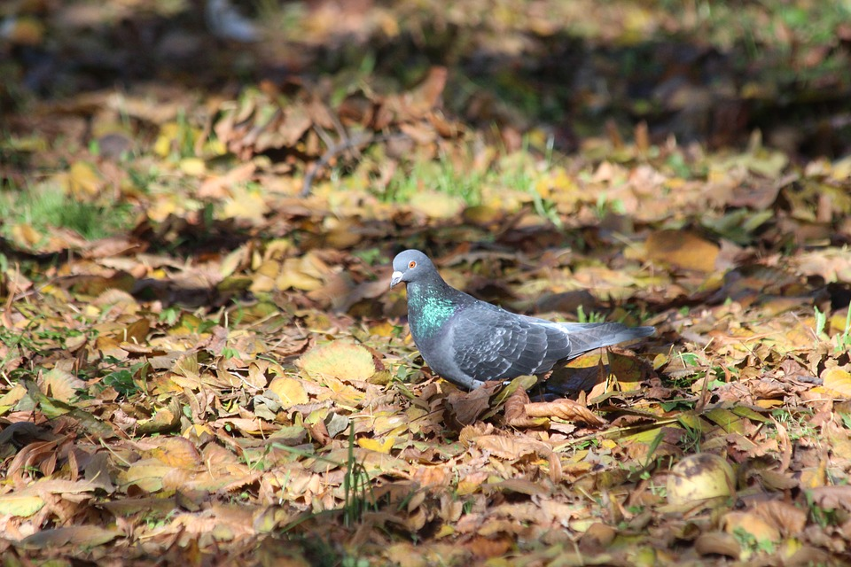 Dove, Nature, Bird, Outdoors, Living Nature, Animals