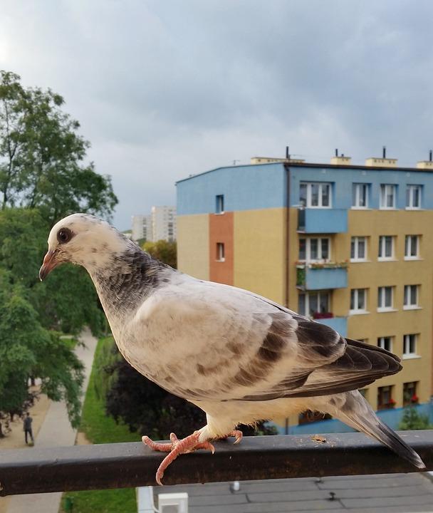 Birds, Dove, Nature, Animals