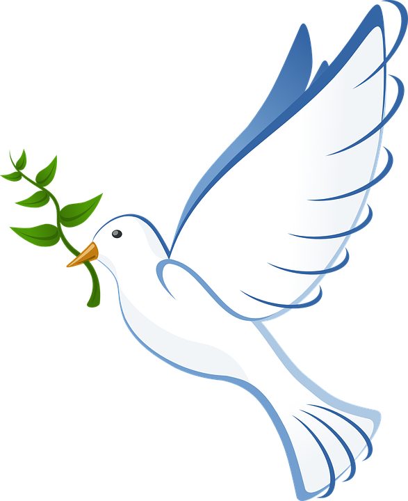 dove flying peace olive branch symbol pigeon