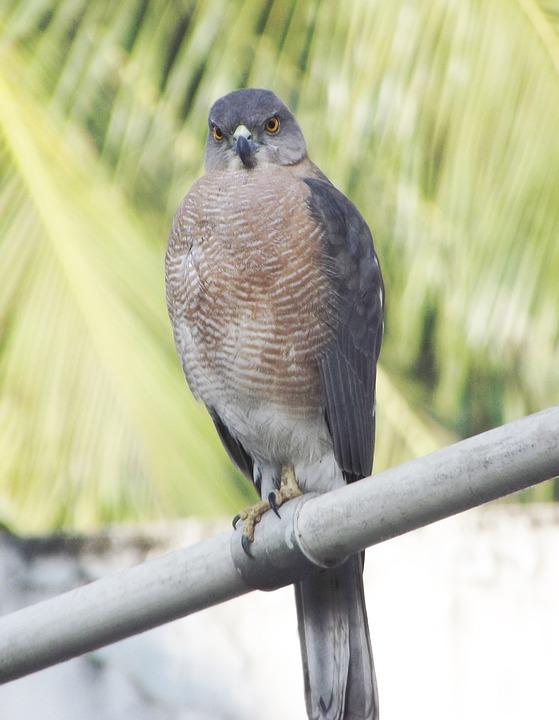 Dove, Bird, Fauna, Urban Birds