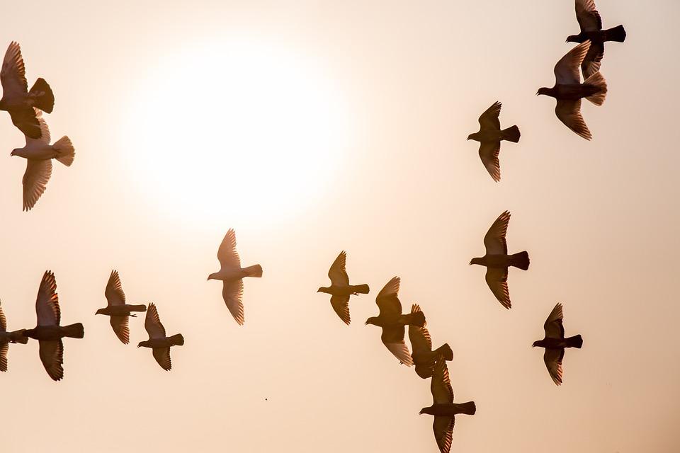 Doves, Animal, Fly, Sun, Evening