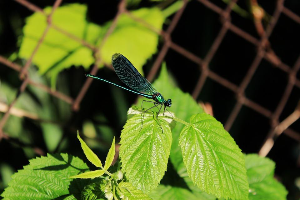 Ważka, Insect, Dragonflies, Worm, Wings, Macro, Nature