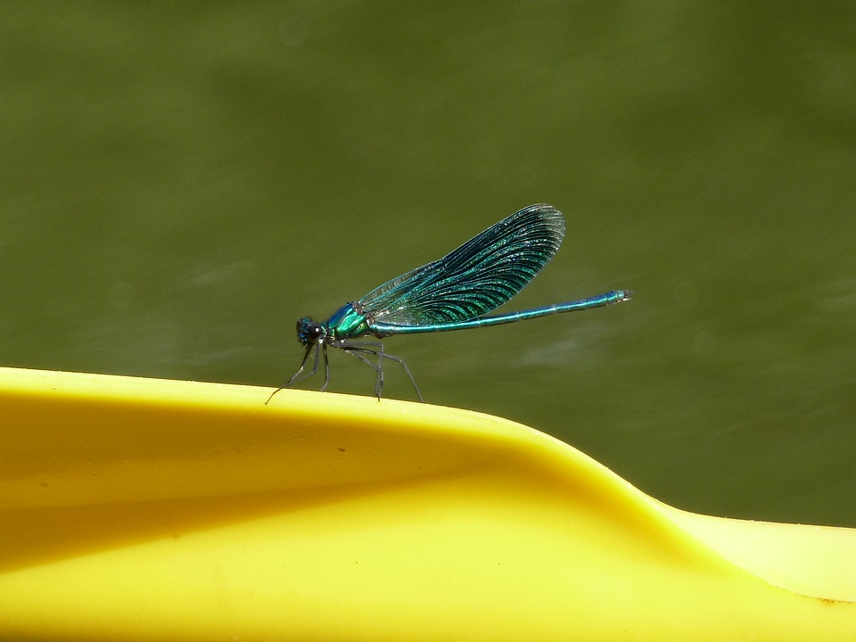 Dragonfly, Insect, Blue, Yellow, Nature, Summer, Bright