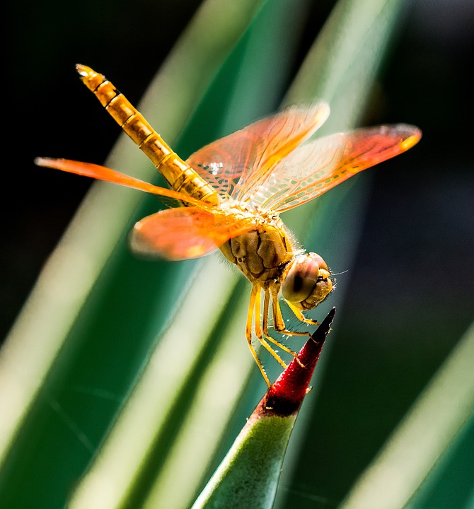 Dragonfly, Insect, Close