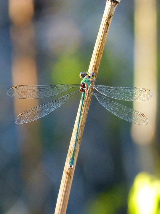 Dragonfly, Green, Branch, Beautiful, Insect, Wings