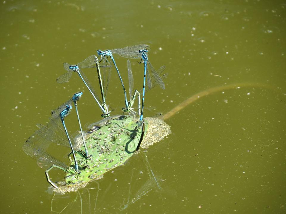 Dragonfly, Summer, Water, Nature