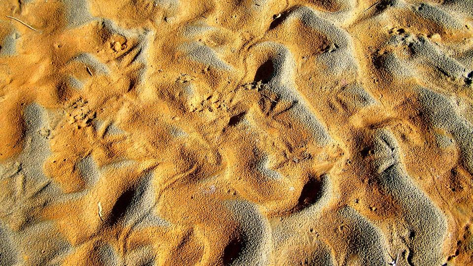 Drava, Shelf, Animal Footprints, Waving Red Sand