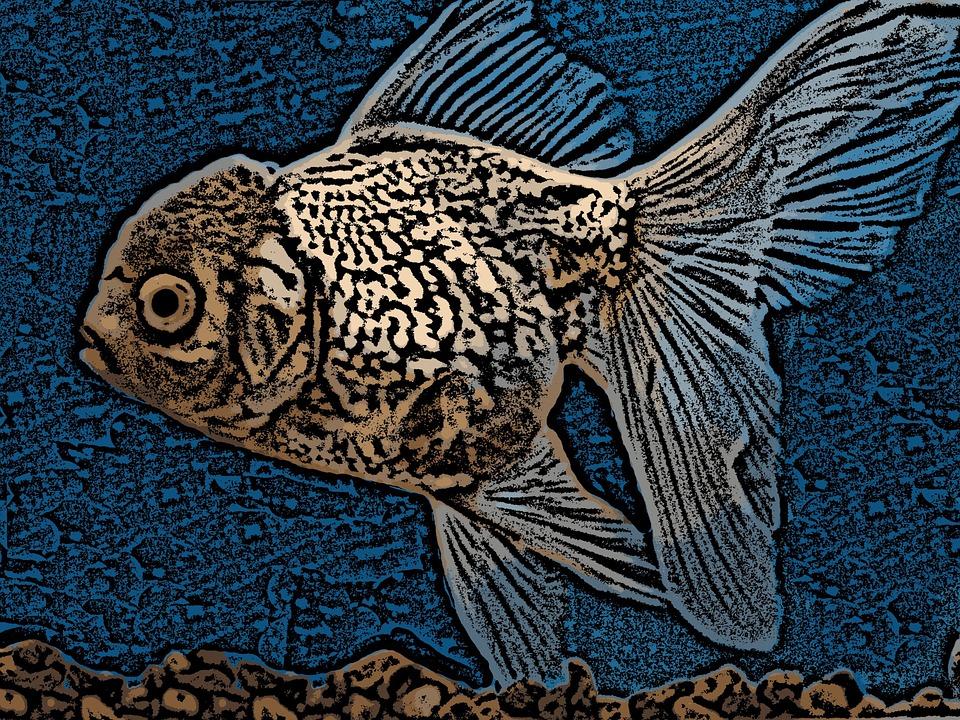 Digital Art, Fish, Goldfish, Drawing, Art, Aquarium