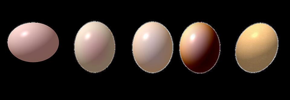 Egg, Eggs, Drawing, Eggs Drawn, Egg Yellow