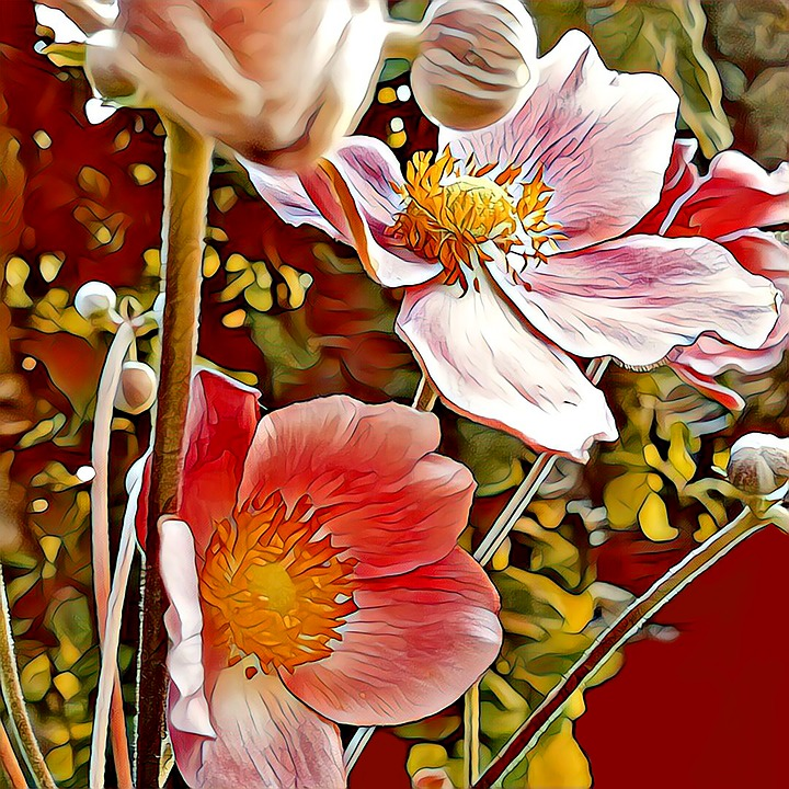 Flower, Høstanamone, Drawing, Plant, Painted, Graphics