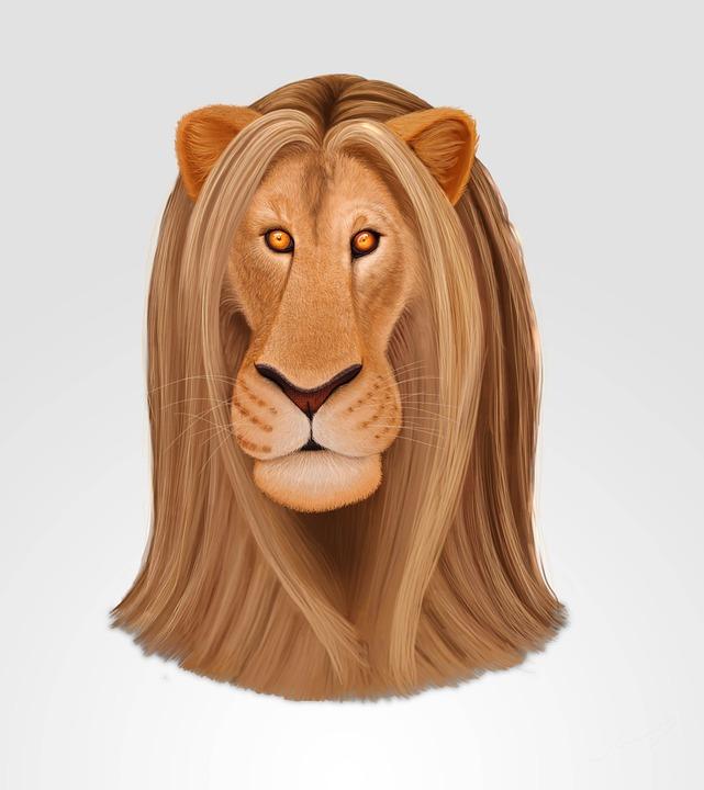 Lion, Drawing, Illustration, Nature, Hair, Wild Animal