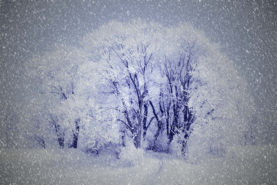 Drawing, Wintry, Snow, Trees
