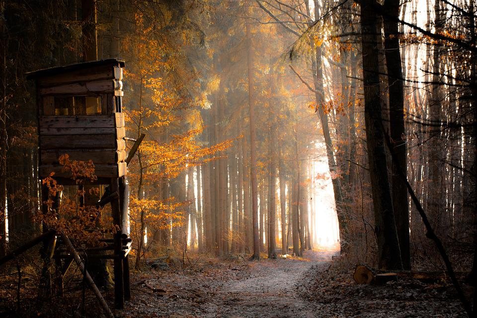 Forest, Dream, Fog, Magic, Mysterious, Fantasy