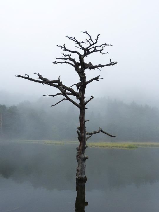 Free Photo Dream Symbolism Lake Reflection Dead Tree Sadness Max Pixel