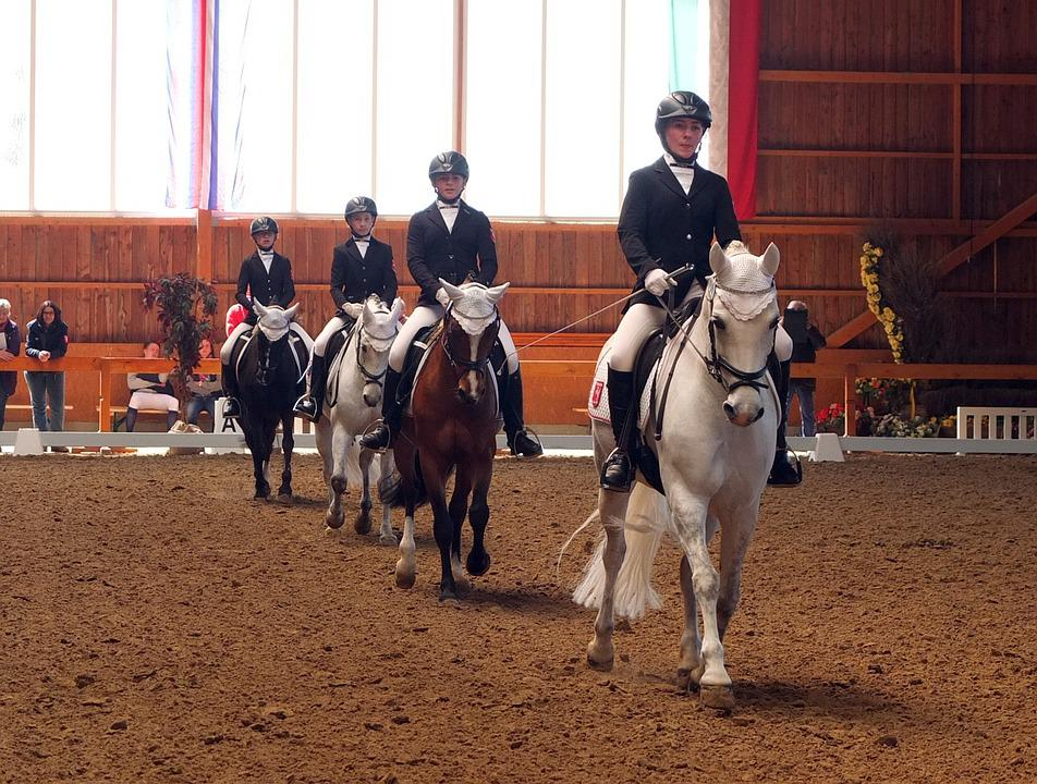 Dressage, Tournament, Equestrian, Show Jumping, Team