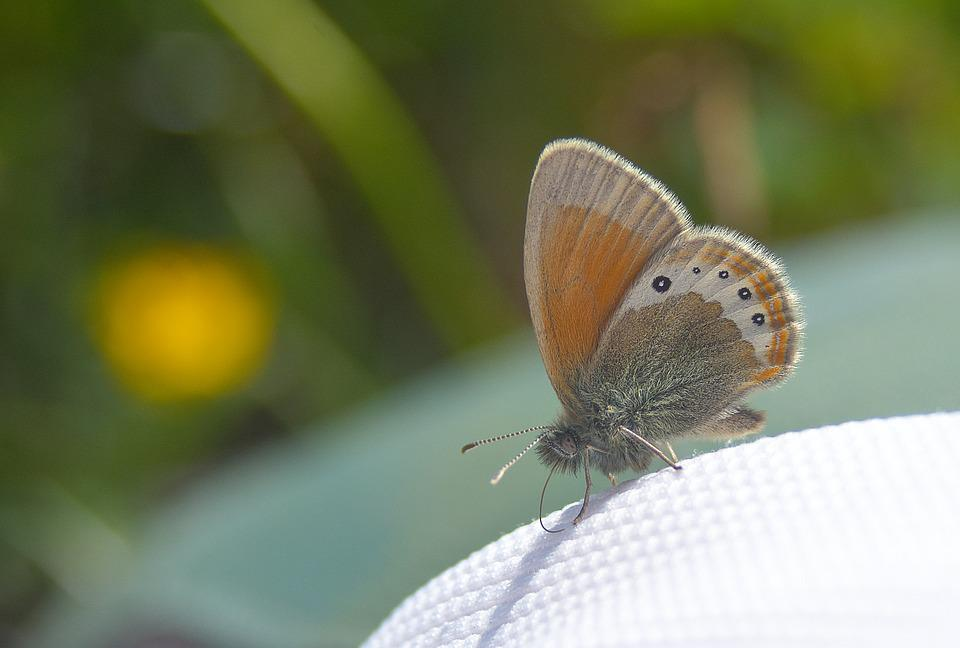 Butterfly, Close, Nature, Drexel, Macro