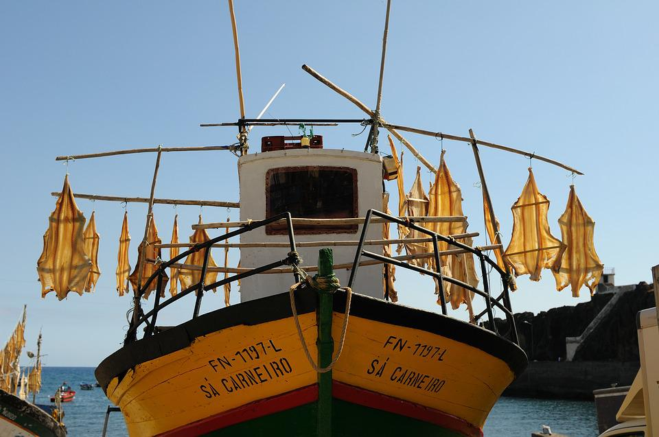 Madeira, Portugal, Boot, Dried Fish, Fish, Fischer