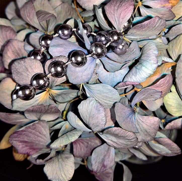 Hydrangeas, Dried Hydrangea Flowers, Blue Violet