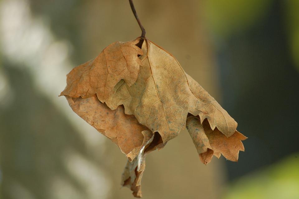 Leaf, Autumn, Dried Leaves, Autumn Woods