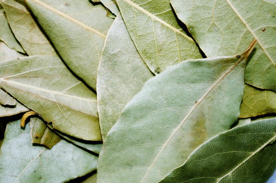 Bay Leaf, Pepper, Cooking, Laurel, Green, Dried