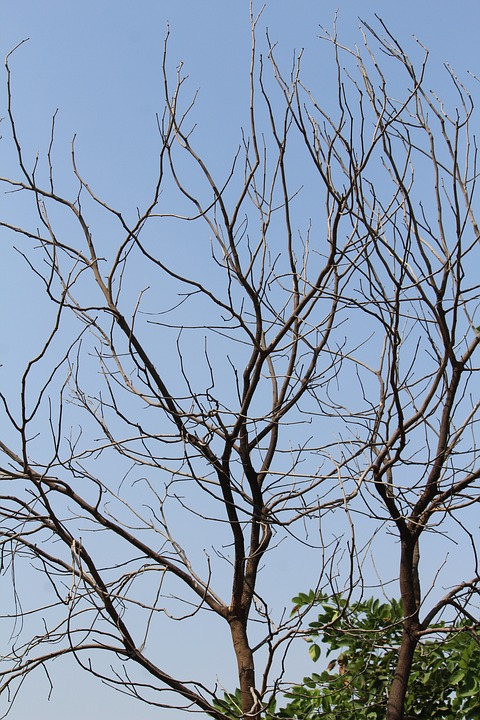 Tree, Branches, Dried