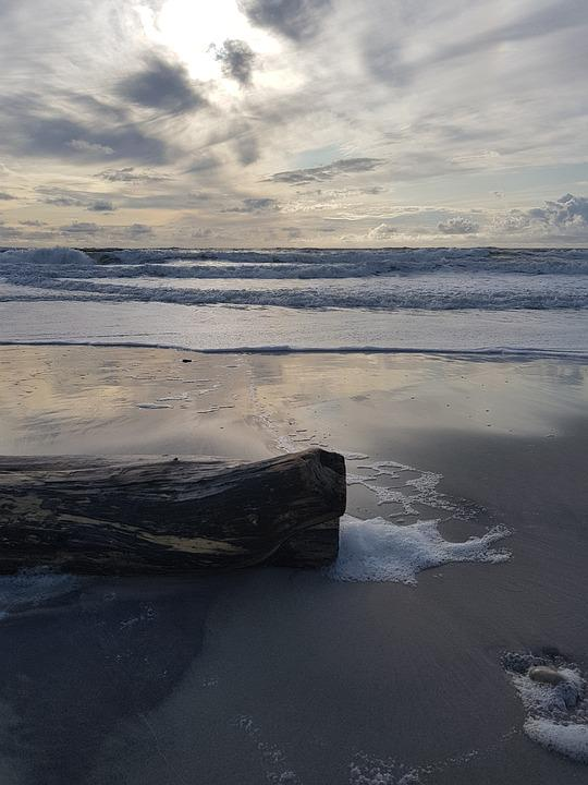 Wood, Sand, Beach, Sea, Sand Beach, Summer, Drift Wood