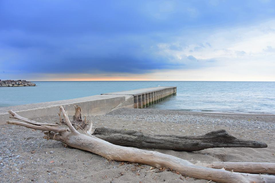 Toronto, Beach, Driftwood