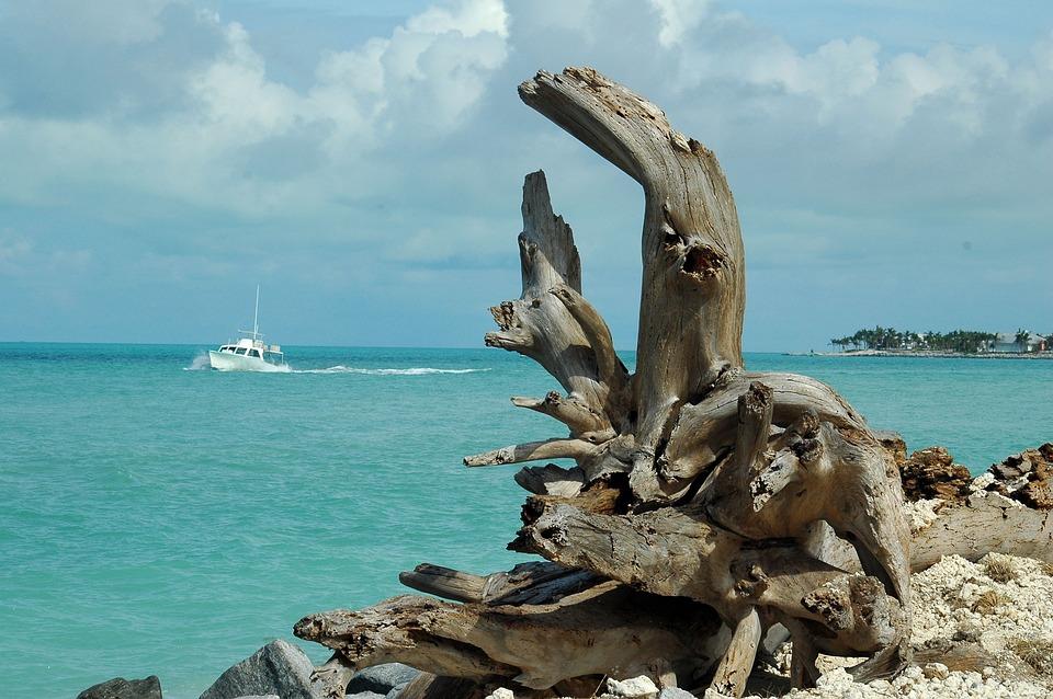Driftwood, Landscape, Seascape, Boat, Tropical Climate